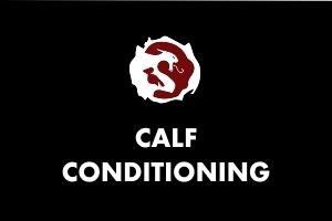 Calf Conditioning